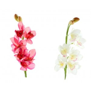 Cymbidium Natural Touch assortito in 2 colorazioni cm. 70